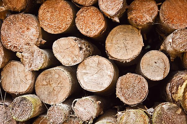 Wood – a natural resource