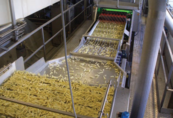 Potato Processor Implements Automatic Defect Removal System